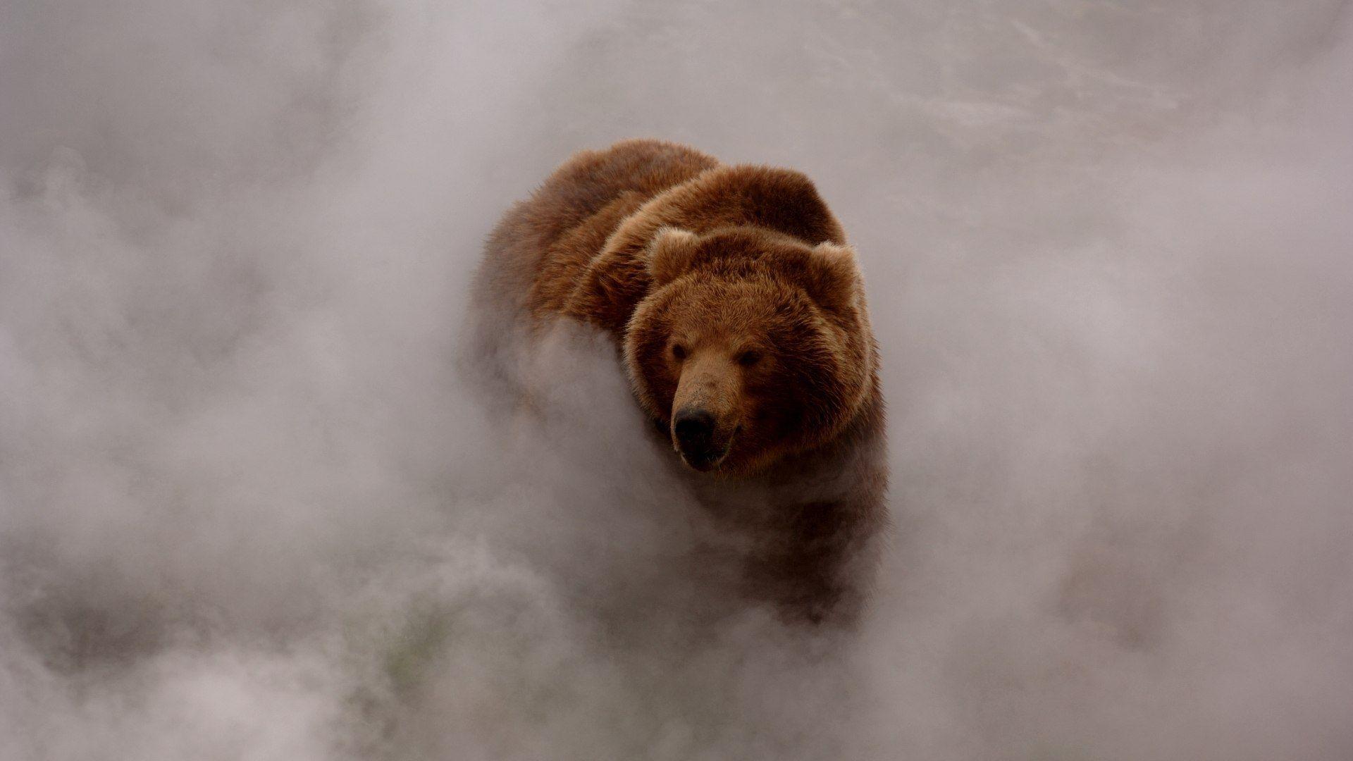 Bear-in-Fog